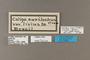125214 Caligo eurilochus livius labels IN