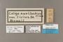 125215 Caligo eurilochus livius labels IN