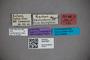 3047667 Stenus callifrons ST labels2 IN
