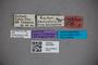 3047667 Stenus callifrons ST labels IN