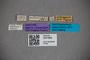 3047668 Stenus callipennis ST labels IN