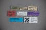 3047671 Stenus calvus ST labels2 IN