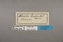 125253 Morpho menelaus godartii labels IN