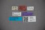 3047675 Stenus capicola ST labels IN