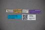 3047681 Stenus humilis cephallenica ST labels IN
