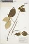 Helicteres baruensis Jacq., BRITISH GUIANA [Guyana], F