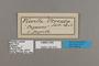 125310 Pierella helvina ocreata labels IN