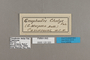 125320 Gnophodes chelys labels IN