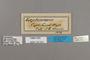 125323 Torynesis mintha labels IN