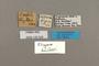 125324 Dingana bowkeri labels IN