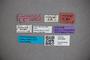 3047694 Stenus civicus ST labels IN