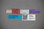 3047696 Stenus coarcticollis var validus ST labels2 IN
