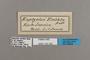 125330 Erichthodes antonina labels IN