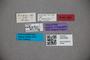 3047698 Stenus columbus HT labels2 IN