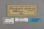 125331 Megeuptychia antonoe labels IN