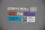 3047706 Stenus congoensis ST labels IN