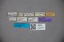 3047707 Stenus conicus ST labels IN