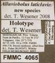 4065 Alluviobolus laticlavius HT IN labels