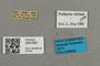 2841681 Bombus psithyrus citrinus m labels IN