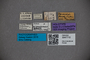 3047710 Stenus conradsi HT labels IN