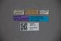 3047712 Stenus continentalis ST labels IN