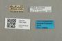 2841688 Bombus fervidobombus fervidus m labels IN