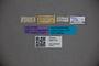 3047716 Stenus corporaali HT labels IN
