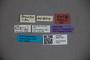 3047718 Stenus conulus ST labels2 IN