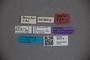 3047718 Stenus conulus ST labels IN