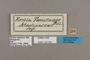125391 Strabena tamatavae labels IN