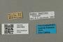 2841693 Bombus pyrobombus impatiens f labels IN