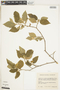 Sterculiaceae, COLOMBIA, F