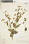 Sterculiaceae, ARGENTINA, F