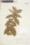 Sterculiaceae, VENEZUELA, F