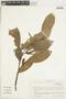 Sterculiaceae, ECUADOR, F