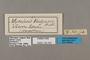 125397 Bicyclus vulgaris labels IN