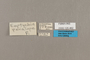 125462 Cissia penelope labels IN