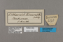 125423 Cithaerias andromeda esmeralda labels IN