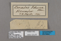 125432 Corades iduna labels IN