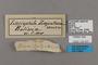 125437 Lasiophila zapatoza labels IN