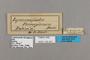125451 Lymanopoda ferruginosa labels IN