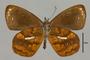 125451 Lymanopoda ferruginosa v IN