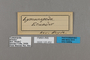 125452 Lymanopoda sp labels IN
