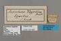 125480 Antirrhea taygetina labels IN