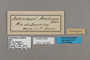125481 Antirrhea archaea labels IN