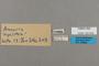 125502 Amauris hyalites labels IN