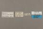 125506 Amauris albimaculata labels IN