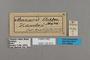 125513 Amauris ochlea labels IN