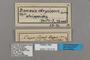 125519 Danaus chrysippus chrysippus labels IN