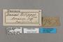 125527 Danaus gilippus labels IN